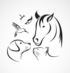 Pets Horse dog cat bird butterfly dragonfly vector image