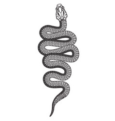 Poisonous snake in engraving style design element vector