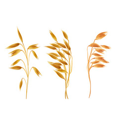 Realistic oat ears with seads grains cereals set vector