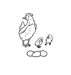 Sketch farm birds breeding laying hens and vector