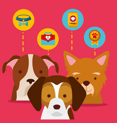 dog animal domestic vector image