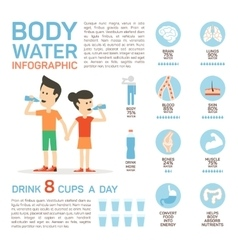 Flat style body water infographic vector