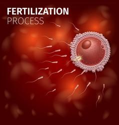 Human egg cell fertilization with sperm cells vector