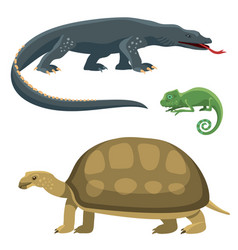 Reptile and amphibian colorful fauna vector