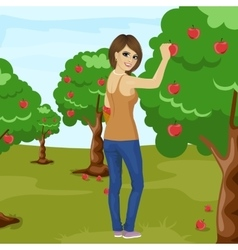 Woman picking red apple from tree in orchard vector