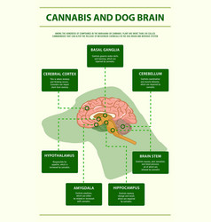 Cannabis and dog brain vertical infographic vector