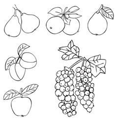 Fruit grapes apple and pear vector