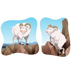 Goats standing on the cliff vector image