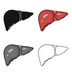 Human liver icon in cartoon style isolated on vector