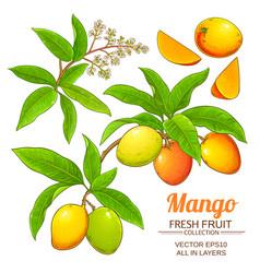 Mango plant isolated on white background vector