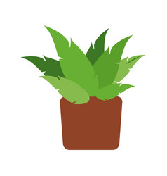 pot plant natural decoration space vector image