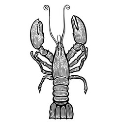 lobster hand drawn vector image