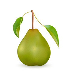 realistic green pear vector image