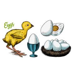 chicken and egg holder nest and yolk engraved vector image