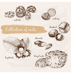 collection nuts vector image