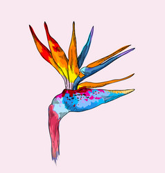 Graphic colorful strelitzia exotic flower vector