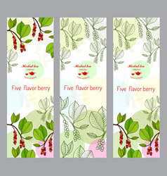 Herbal tea collection five-flavor berry banner vector