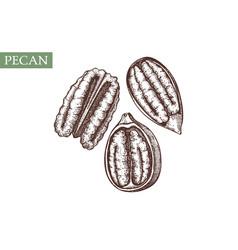 Pecan hand drawn healthy food elements vector