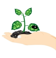 Seedling of the plant in hand vector