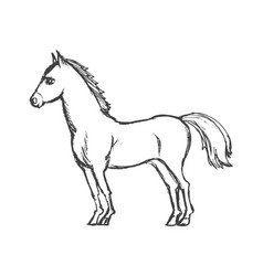 beautiful horse from side vector image vector image