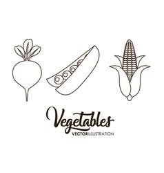 Healthy vegetables icon vector