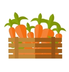 Fresh Carrot at the Market vector image vector image