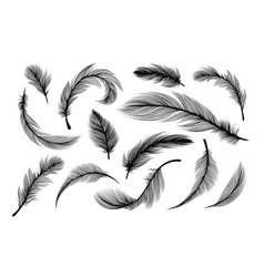 fluffy feathers flying plume quills silhouettes vector image