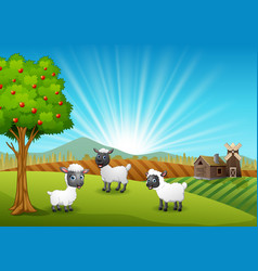 Happy three sheeps in farm background vector