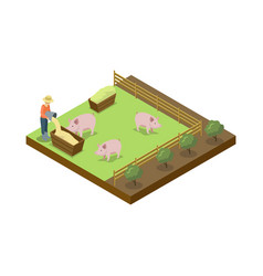 Pigs breeding on ranch isometric 3d element vector