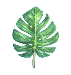green tropical monstera leaf vector image vector image