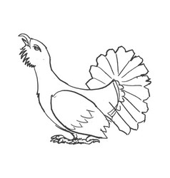 sketch of grouse bird vector image