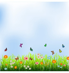 Green grass flowers and butterflies vector image