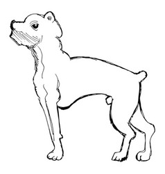 sketch of boxer dog vector image