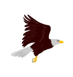 Bald Eagle Flying vector
