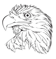 bald eagle head hand draw black line on white vector image