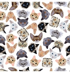 flat seamless pattern pedigree cats vector image