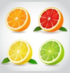 Fresh citrus fruit halves orange grapefruit lemon vector