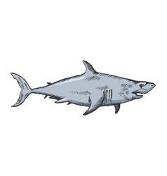 shark color sketch vector image