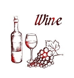 sketch wine bottle glass and grapes vector image