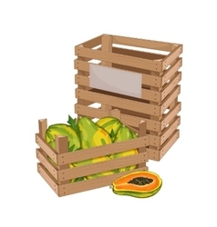 Wooden box full of papaya isolated vector image