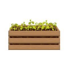 Young seedlings vegetables or flowers in garden vector