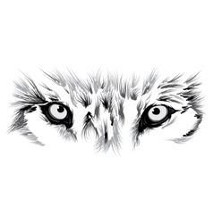beautiful Wolf face vector image vector image