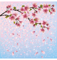 Spring background with sakura blossom cherry tree vector image vector image