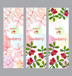 herbal tea collection cowberry banner set vector image