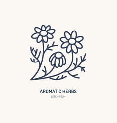 Chamomile line icon aromatic herbs logo vector
