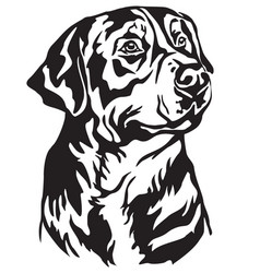 Decorative portrait of greater swiss mountain dog vector