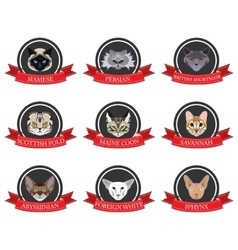 Flat icons set of pedigreed cats with the names vector