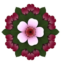 Floral rosette pink cherry flower vector
