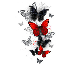 flying black and red morpho vector image