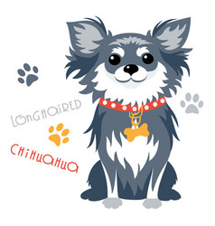 Funny longhaired chihuahua dog sitting vector